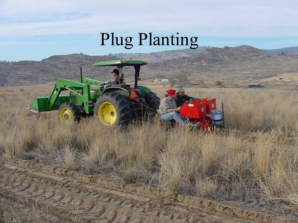 Plug Planting