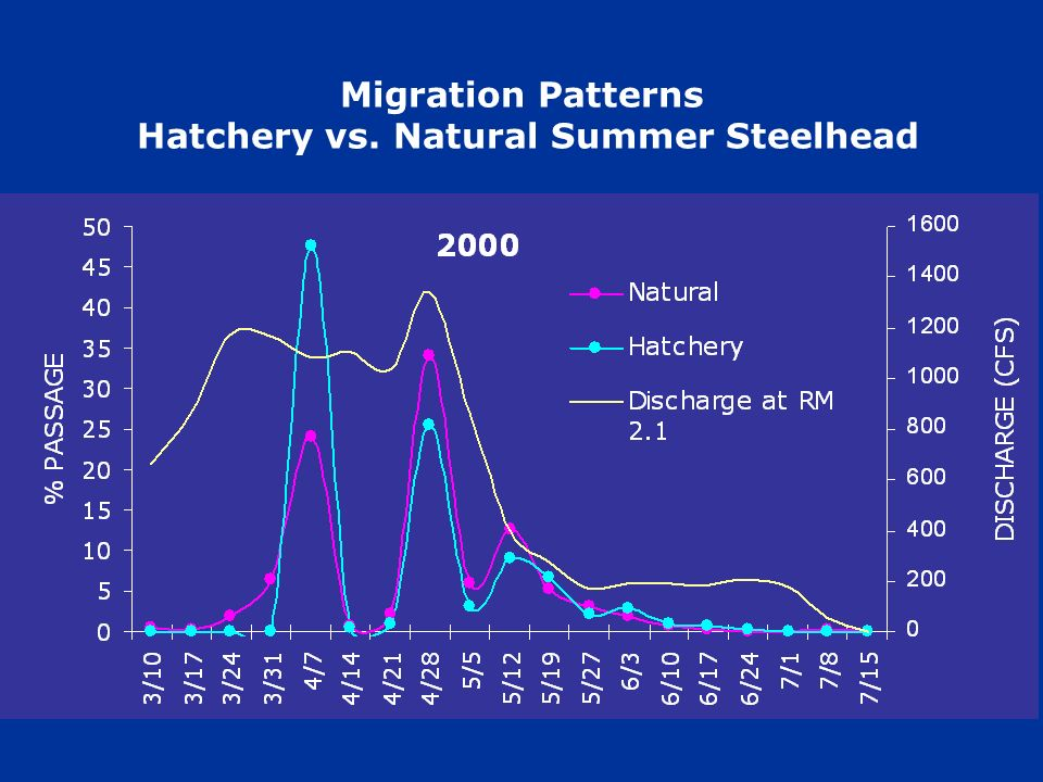 Migration Patterns Hatchery vs. Natural Summer Steelhead