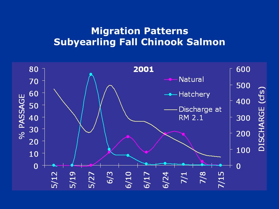 Migration Patterns Subyearling Fall Chinook Salmon