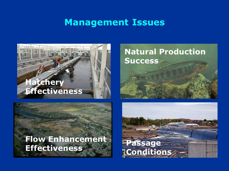 Management Issues Hatchery Effectiveness Natural Production Success Flow Enhancement Effectiveness Passage Conditions