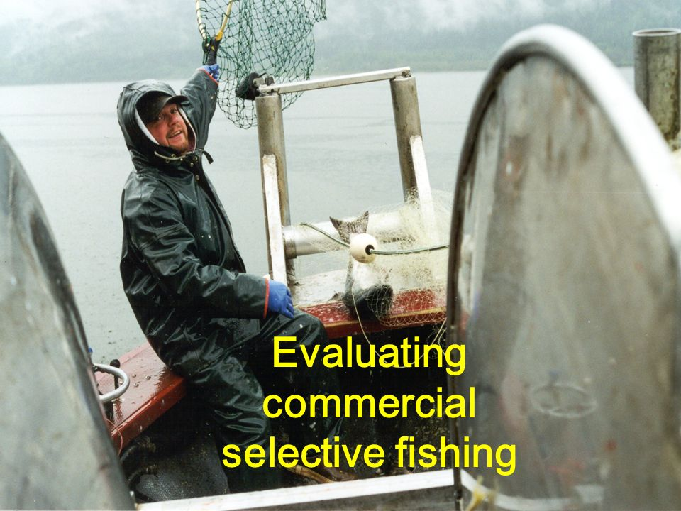 Evaluating commercial selective fishing