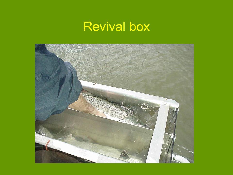 Revival box