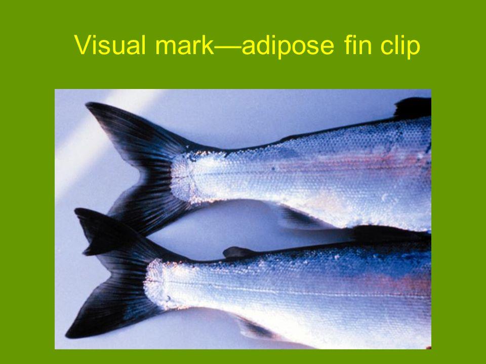 Visual markadipose fin clip