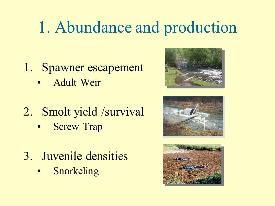 1. Abundance and production 1.Spawner escapement Adult Weir 2.Smolt yield /survival Screw Trap 3.Juvenile densities Snorkeling