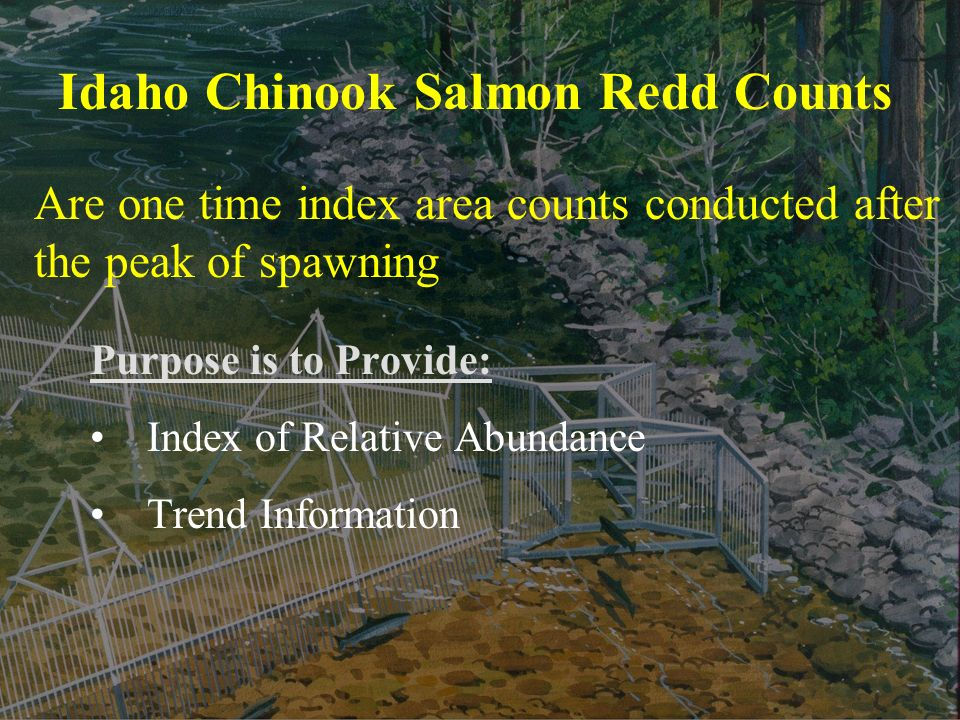 Idaho Chinook Salmon Redd Counts Purpose is to Provide: Index of Relative Abundance Trend Information Are one time index area counts conducted after the peak of spawning