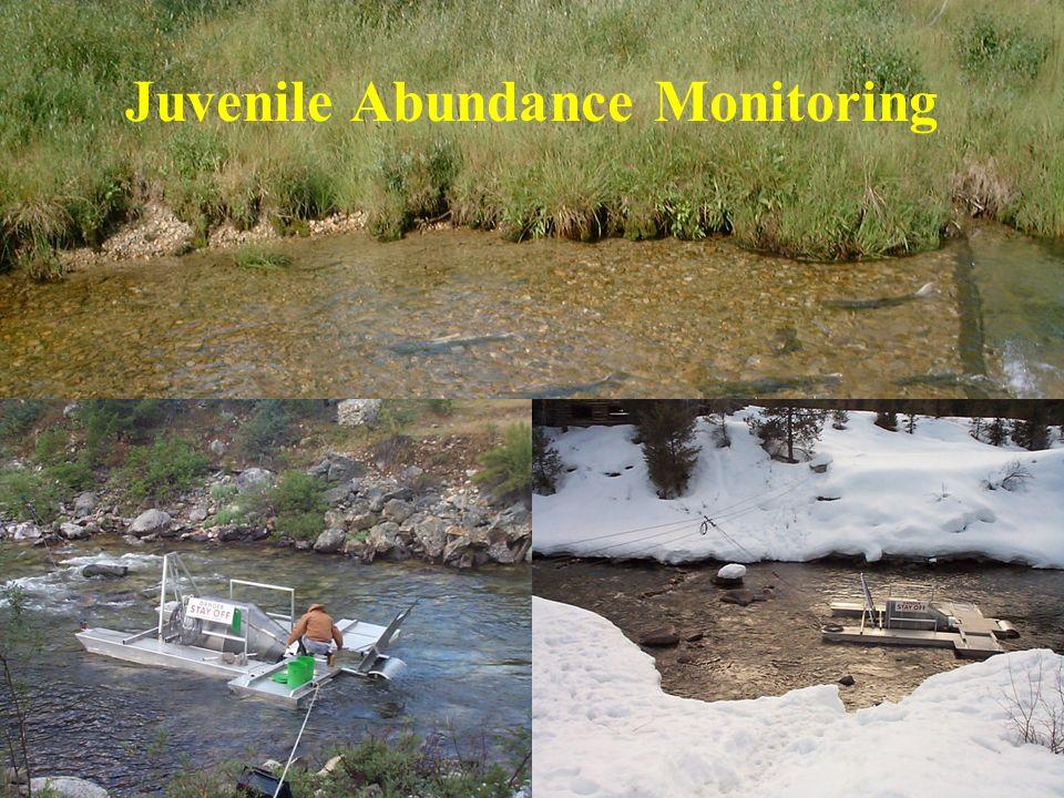Juvenile Abundance Monitoring