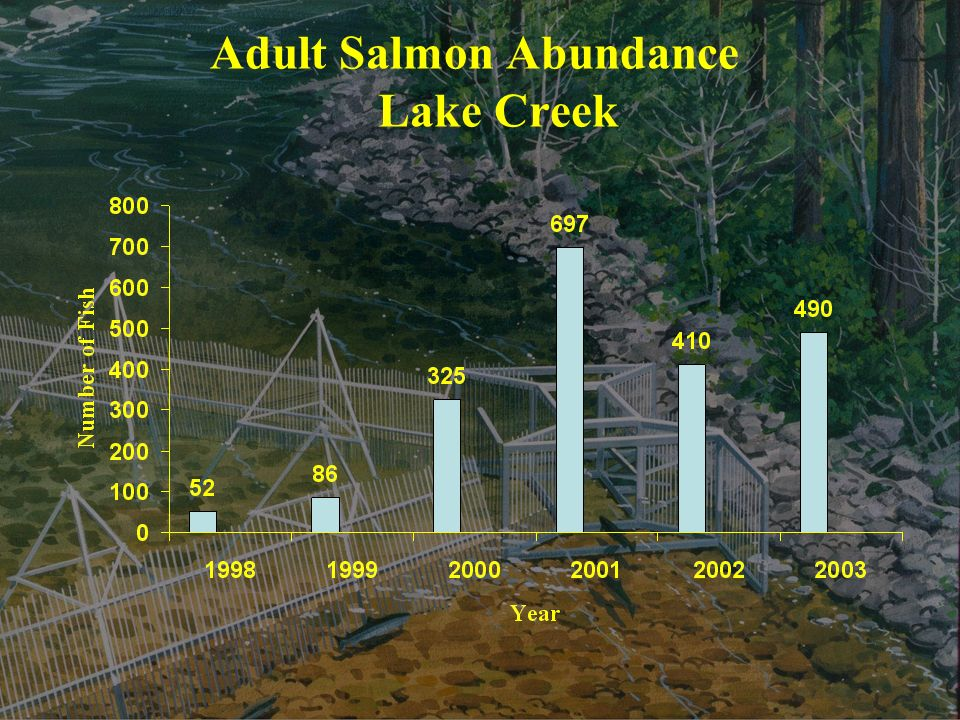 Adult Salmon Abundance Lake Creek