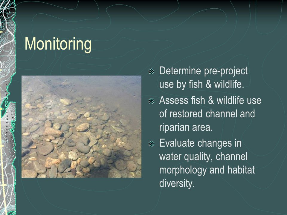 Monitoring Determine pre-project use by fish & wildlife. Assess fish & wildlife use of restored channel and riparian area. Evaluate changes in water q