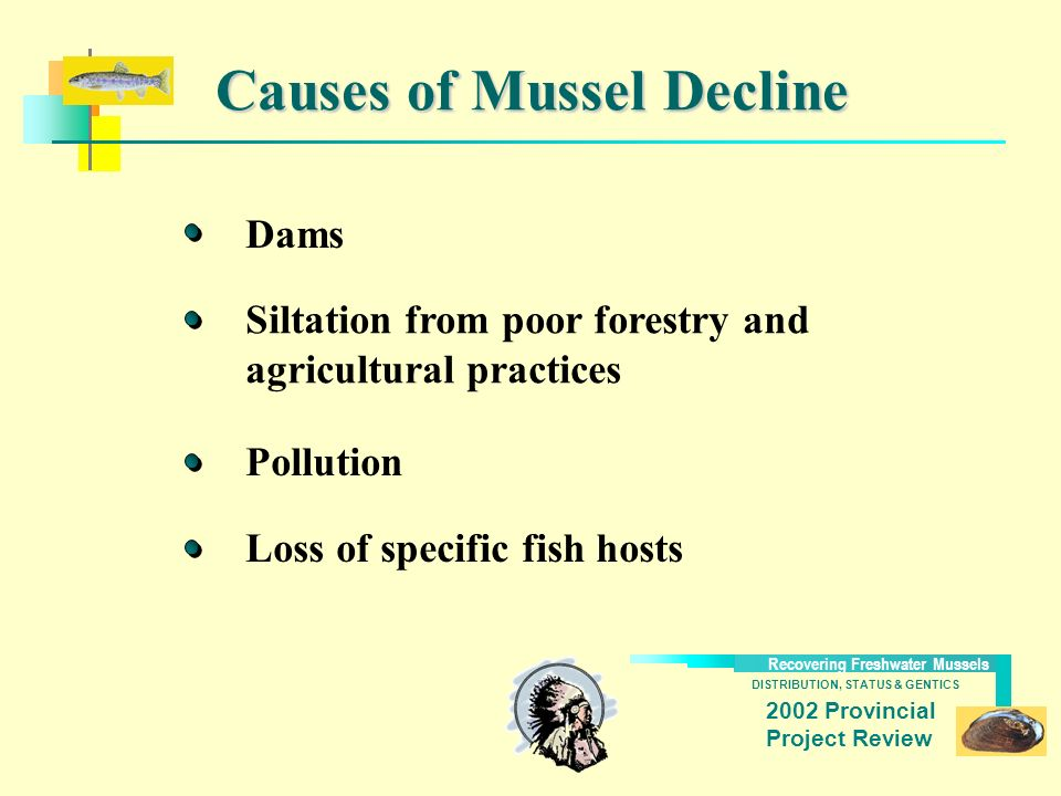 DISTRIBUTION, STATUS & GENTICS Recovering Freshwater Mussels 2002 Provincial Project Review Causes of Mussel Decline Dams Loss of specific fish hosts