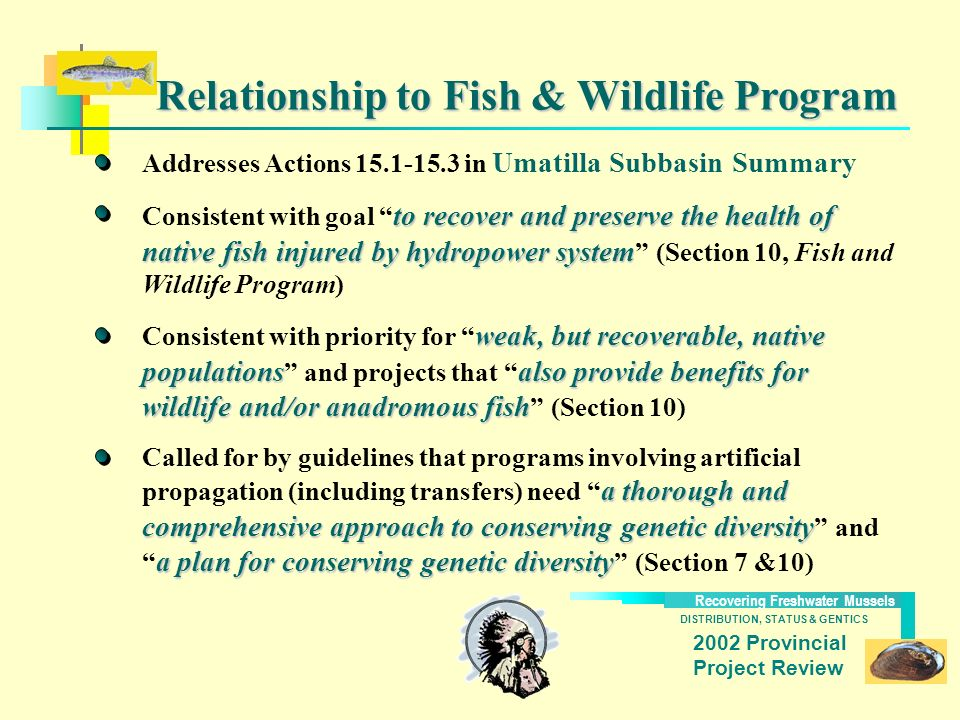 DISTRIBUTION, STATUS & GENTICS Recovering Freshwater Mussels 2002 Provincial Project Review Relationship to Fish & Wildlife Program Addresses Actions