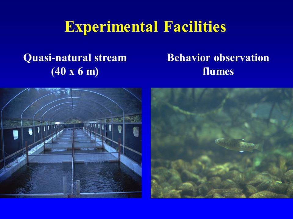 Experimental Facilities Quasi-natural stream (40 x 6 m) Behavior observation flumes