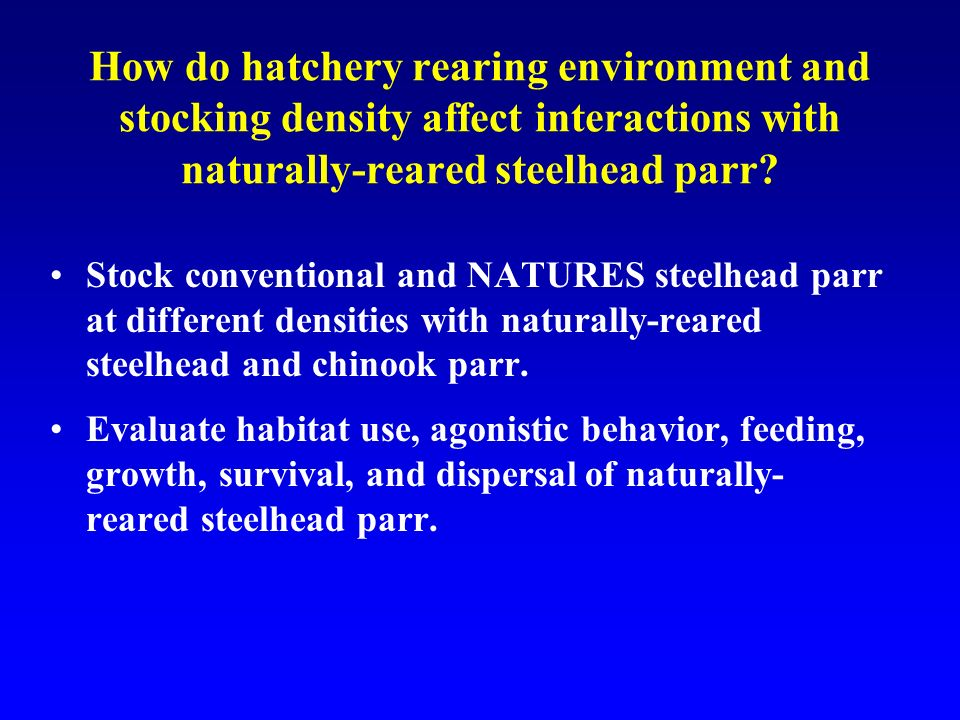 How do hatchery rearing environment and stocking density affect interactions with naturally-reared steelhead parr.