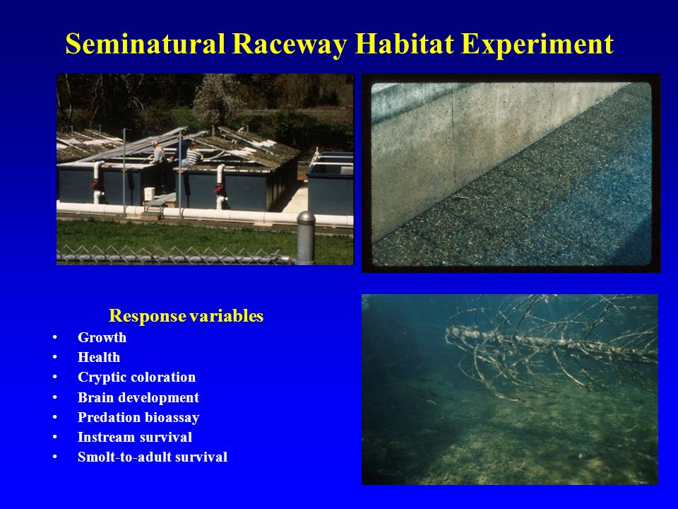 Seminatural Raceway Habitat Experiment Response variables Growth Health Cryptic coloration Brain development Predation bioassay Instream survival Smolt-to-adult survival