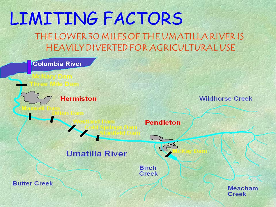 LIMITING FACTORS THE LOWER 30 MILES OF THE UMATILLA RIVER IS HEAVILY DIVERTED FOR AGRICULTURAL USE