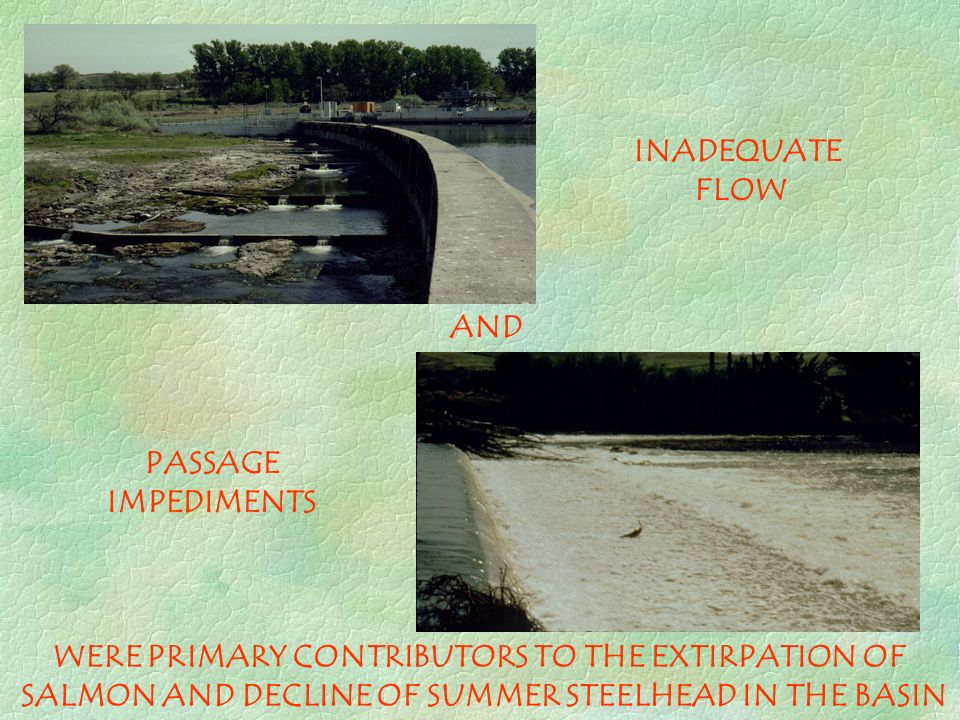 INADEQUATE FLOW AND PASSAGE IMPEDIMENTS WERE PRIMARY CONTRIBUTORS TO THE EXTIRPATION OF SALMON AND DECLINE OF SUMMER STEELHEAD IN THE BASIN