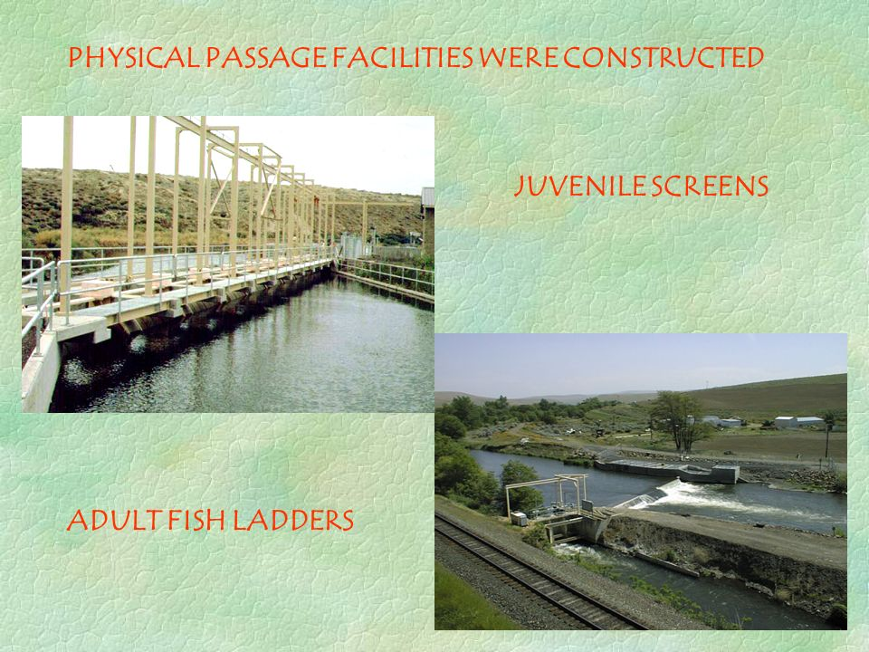 PHYSICAL PASSAGE FACILITIES WERE CONSTRUCTED JUVENILE SCREENS ADULT FISH LADDERS