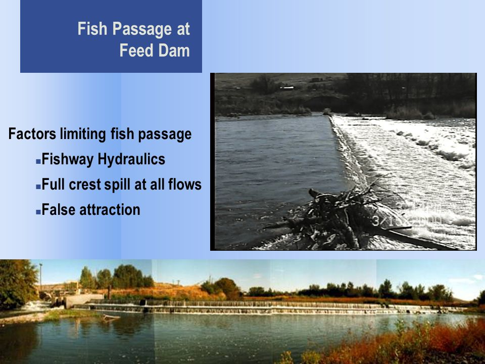 Fish Passage at Feed Dam Factors limiting fish passage Fishway Hydraulics Full crest spill at all flows False attraction