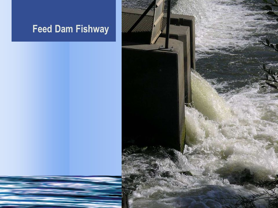 (The Feed Dam is) the only significant barrier to upstream migrants…under adequate flow conditions.