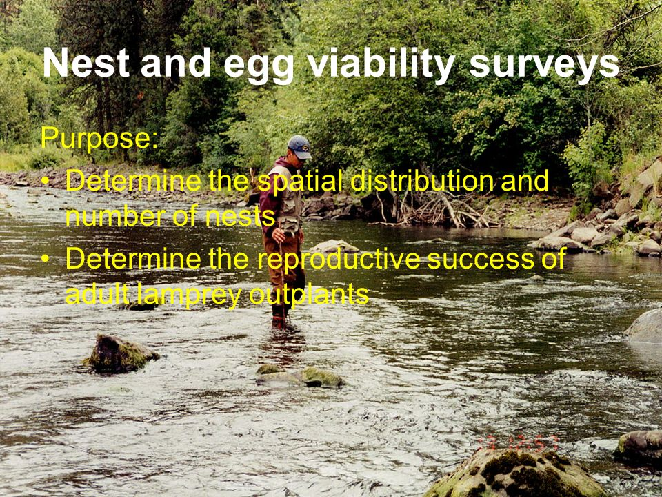 Nest and egg viability surveys Purpose: Determine the spatial distribution and number of nests Determine the reproductive success of adult lamprey out