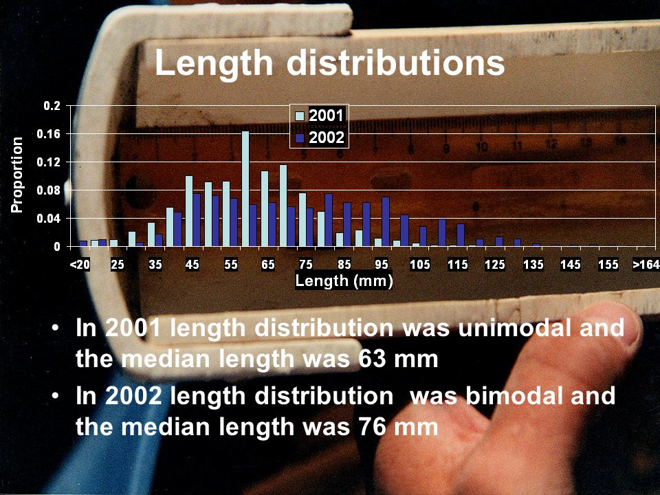 Length distributions In 2001 length distribution was unimodal and the median length was 63 mm In 2002 length distribution was bimodal and the median l