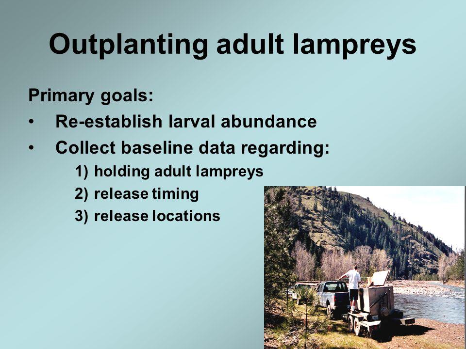 Outplanting adult lampreys Primary goals: Re-establish larval abundance Collect baseline data regarding: 1)holding adult lampreys 2)release timing 3)r