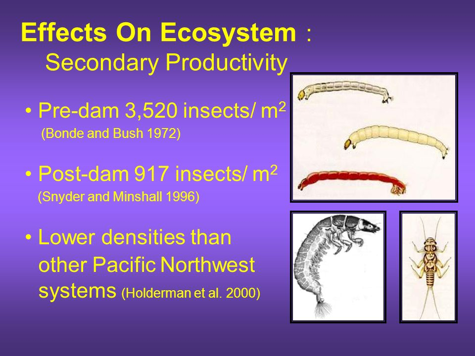 Effects On Ecosystem : Primary Production Main source of bioenergetic development of higher trophic levels (Vanote et al. 1980; Allen 1995) Kootenai R