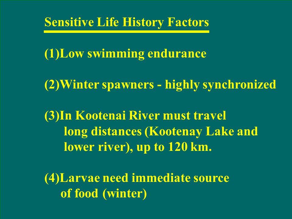 Lake Koocanusa Libby Dam (rkm 352) Kootenai Falls (rkm 310) Yaak River Moyie River Deep Bonners Ferry (rkm 246) Boundary Cr. Goat River (rkm 170) Nels