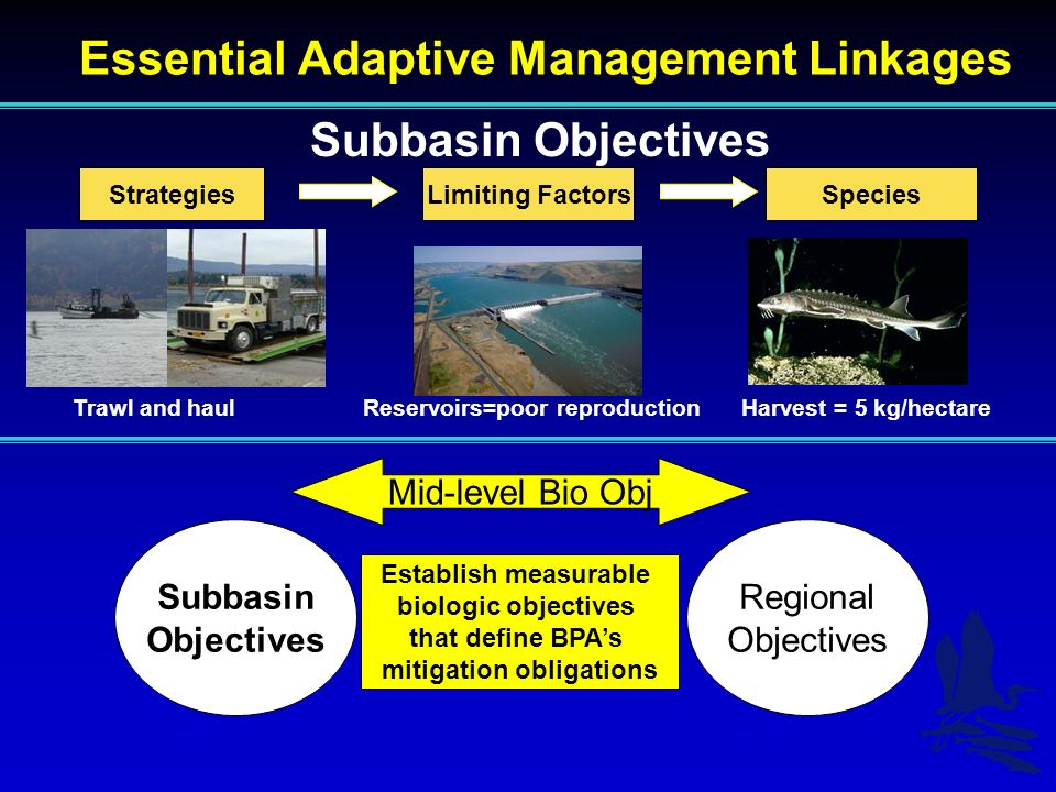Essential Adaptive Management Linkages Subbasin Objectives StrategiesSpeciesLimiting Factors Trawl and haulReservoirs=poor reproductionHarvest = 5 kg/hectare Subbasin Objectives Regional Objectives Mid-level Bio Obj Establish measurable biologic objectives that define BPAs mitigation obligations