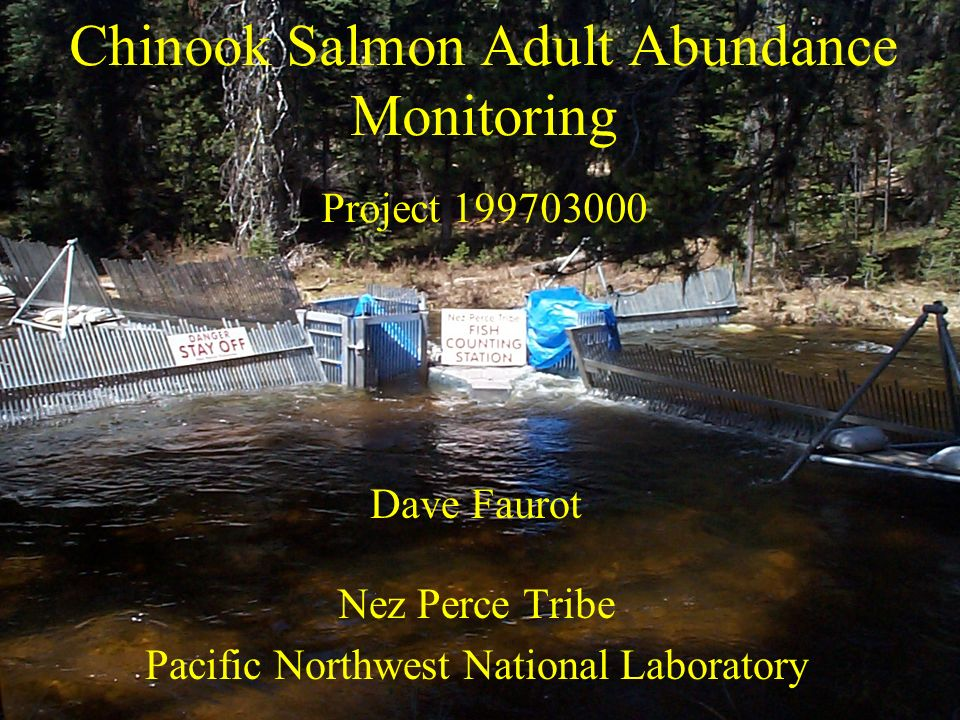 Chinook Salmon Adult Abundance Monitoring Project 199703000 Dave Faurot Nez Perce Tribe Pacific Northwest National Laboratory