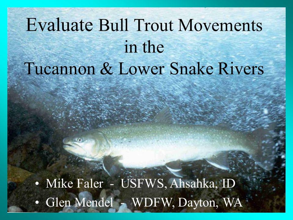 Mike Faler - USFWS, Ahsahka, ID Glen Mendel - WDFW, Dayton, WA Evaluate Bull Trout Movements in the Tucannon & Lower Snake Rivers