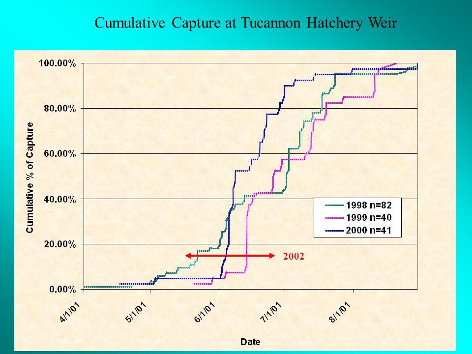 Cumulative Capture at Tucannon Hatchery Weir 2002
