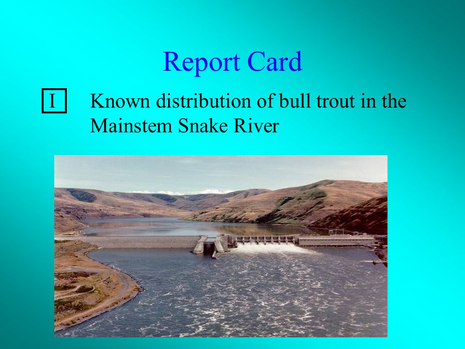 Report Card IKnown distribution of bull trout in the Mainstem Snake River