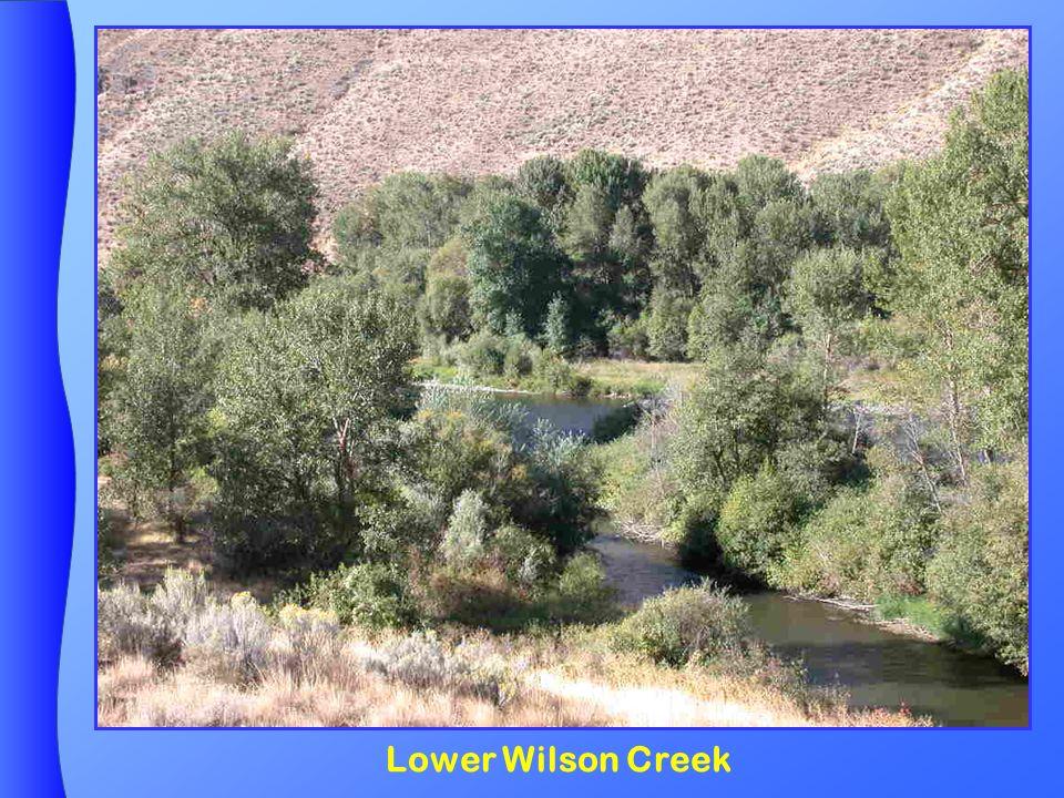 Lower Wilson Creek