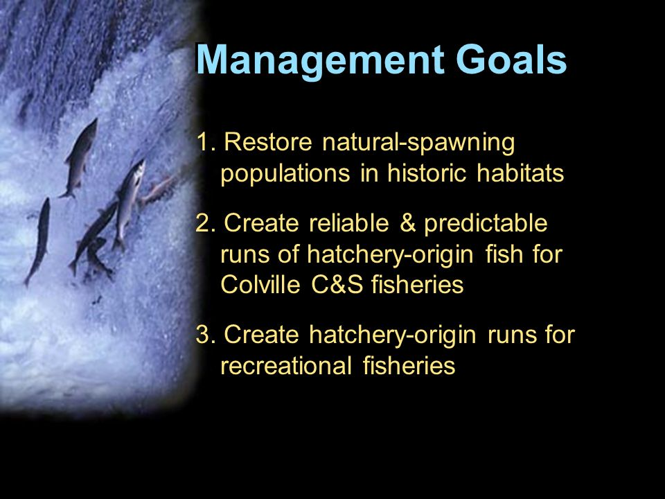 A Columbia River ecosystem that sustains an abundant, productive, and diverse community of fish and wildlife, mitigating across the basin for the adverse effects to fish and wildlife caused by the development and operation of the hydro-system and providing benefits from fish and wildlife valued by the people of the region.