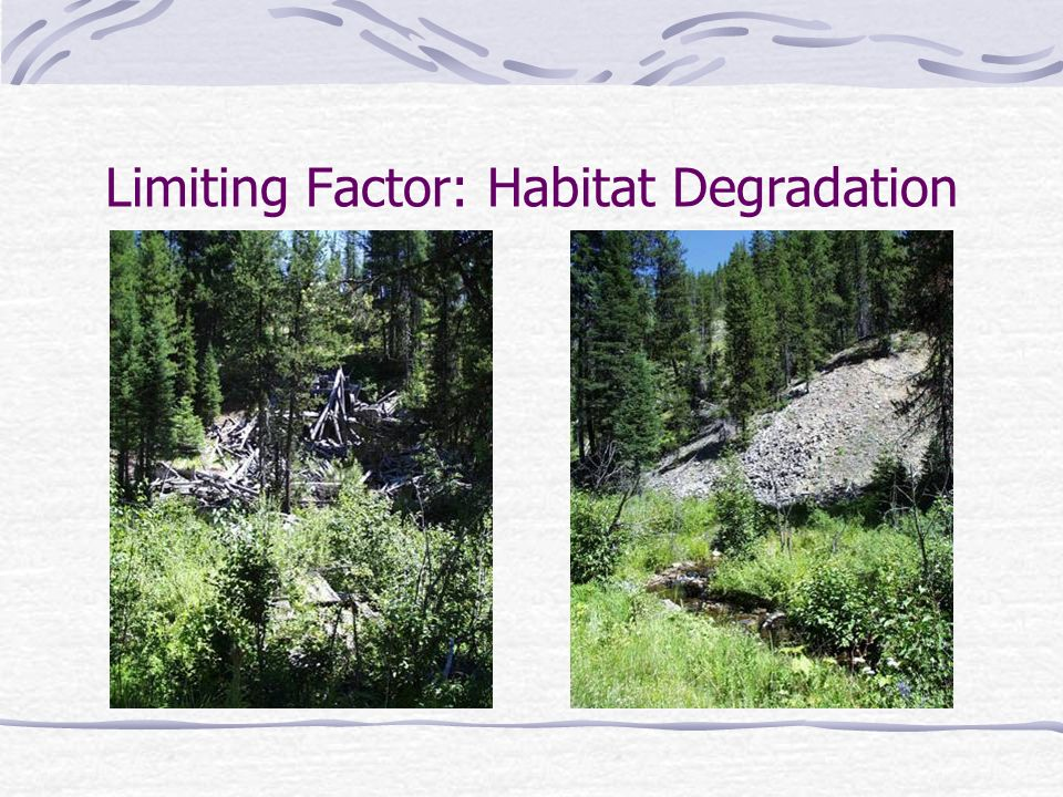 Limiting Factor: Habitat Degradation