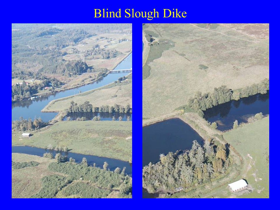 Blind Slough Dike