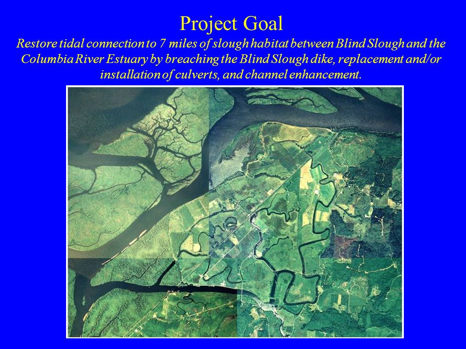 Restore tidal connection to 7 miles of slough habitat between Blind Slough and the Columbia River Estuary by breaching the Blind Slough dike, replacement and/or installation of culverts, and channel enhancement.