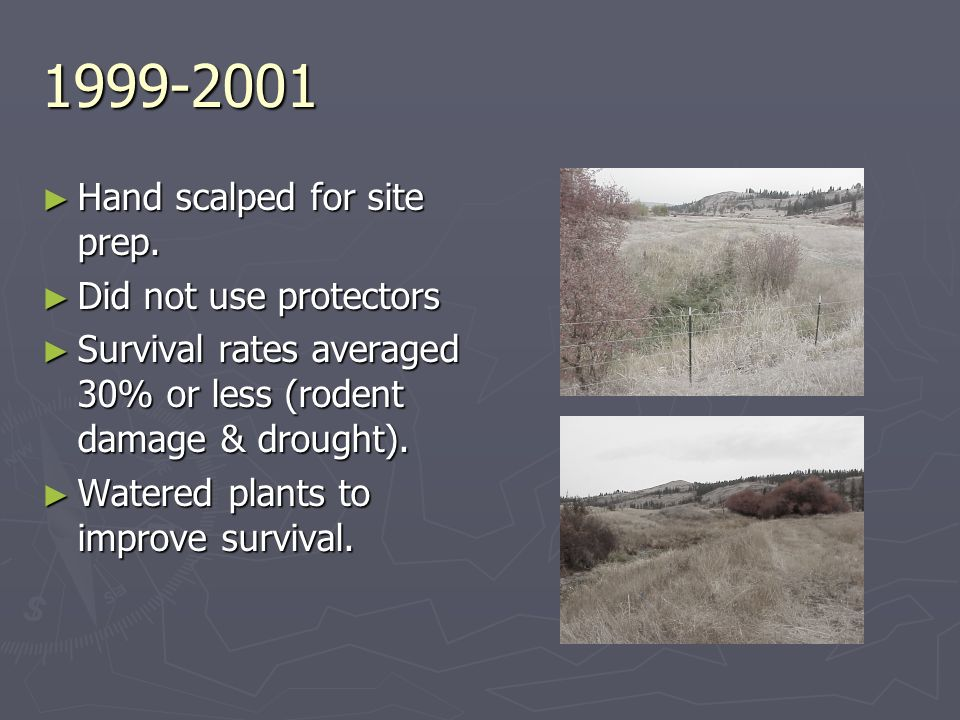 1999-2001 Hand scalped for site prep. Hand scalped for site prep. Did not use protectors Did not use protectors Survival rates averaged 30% or less (r