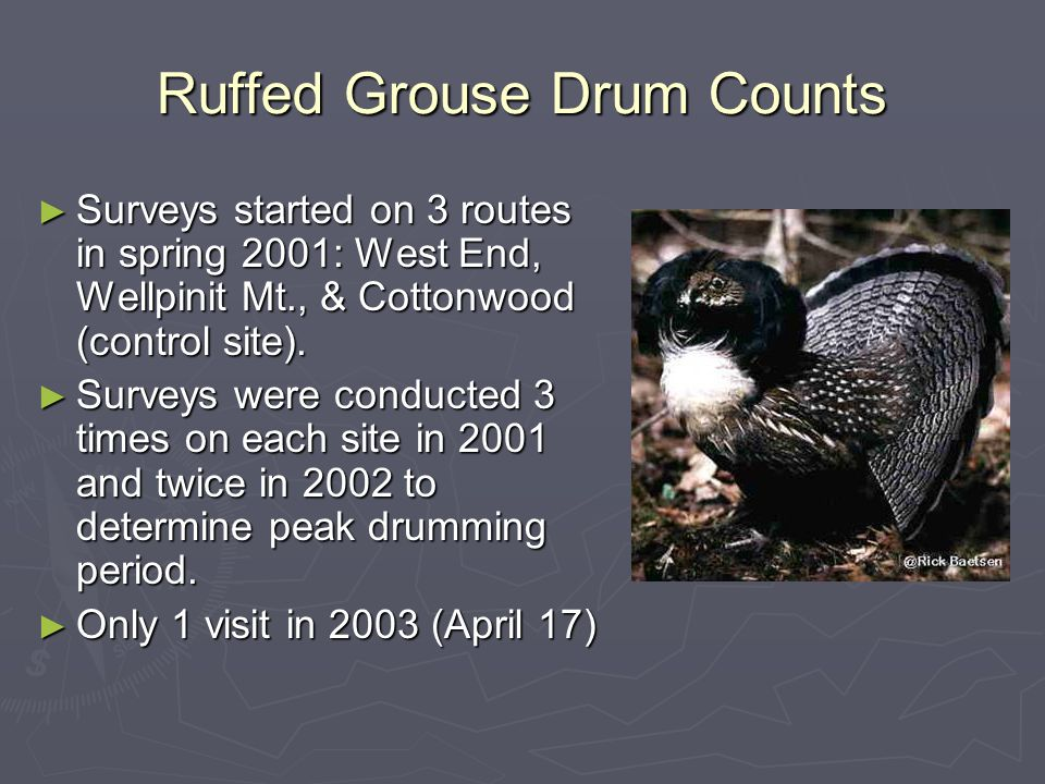 Ruffed Grouse Drum Counts Surveys started on 3 routes in spring 2001: West End, Wellpinit Mt., & Cottonwood (control site).
