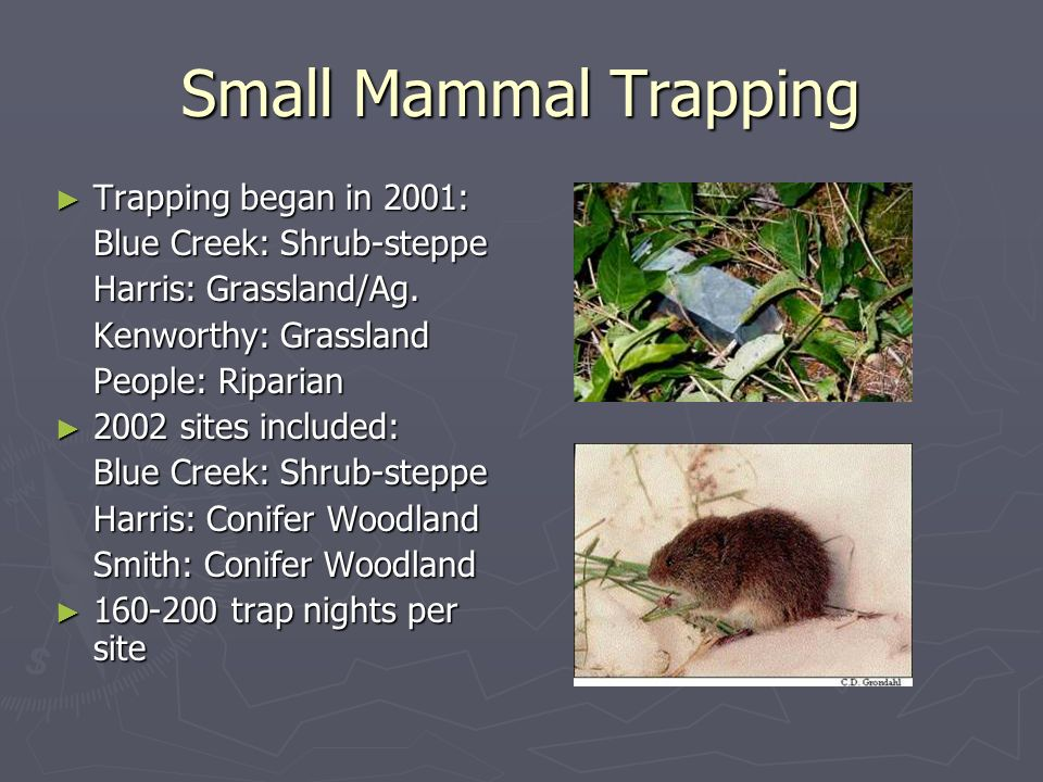 Small Mammal Trapping Trapping began in 2001: Blue Creek: Shrub-steppe Harris: Grassland/Ag.