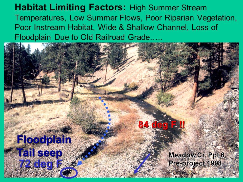 Meadow Cr. Ppt 6, Pre-project,1998 Floodplain Tail seep 84 deg F !! Habitat Limiting Factors: High Summer Stream Temperatures, Low Summer Flows, Poor