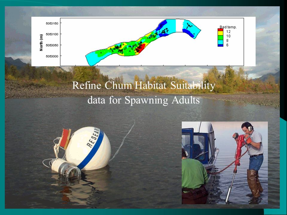 Refine Chum Habitat Suitability data for Spawning Adults