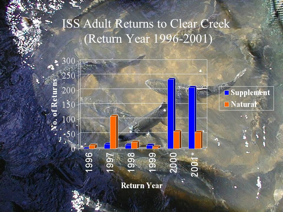 ISS Adult Returns to Clear Creek (Return Year 1996-2001)