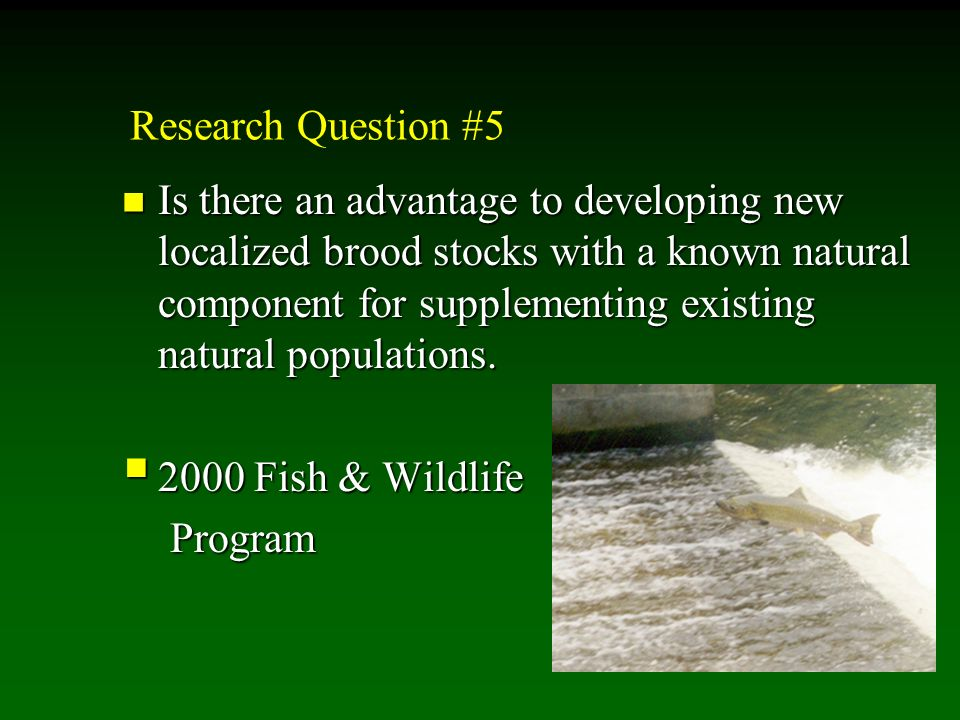 Research Question #5 Is there an advantage to developing new localized brood stocks with a known natural component for supplementing existing natural populations.