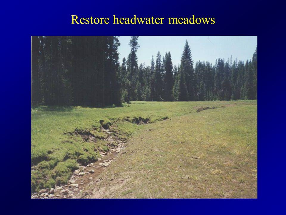 Restore headwater meadows