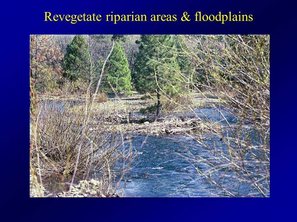 Revegetate riparian areas & floodplains