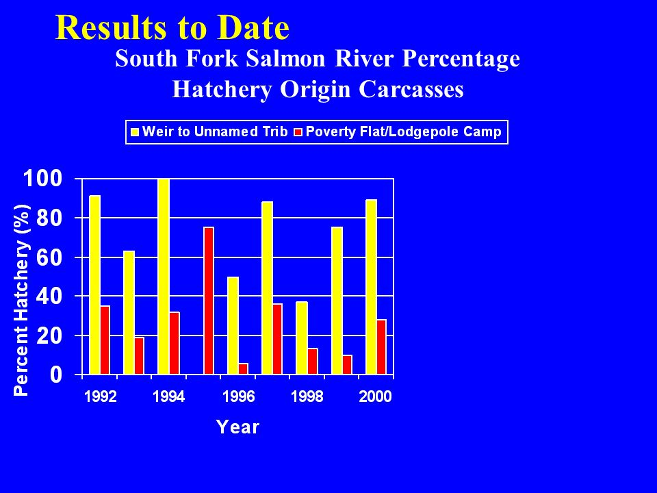 South Fork Salmon River Percentage Hatchery Origin Carcasses Results to Date