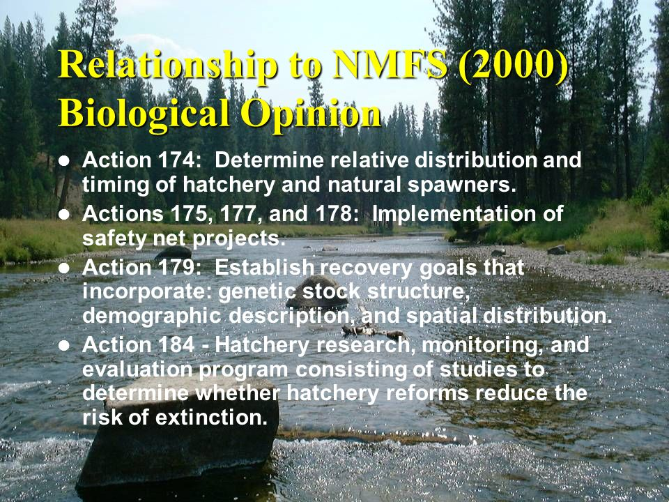Relationship to NMFS (2000) Biological Opinion Action 174: Determine relative distribution and timing of hatchery and natural spawners. Actions 175, 1