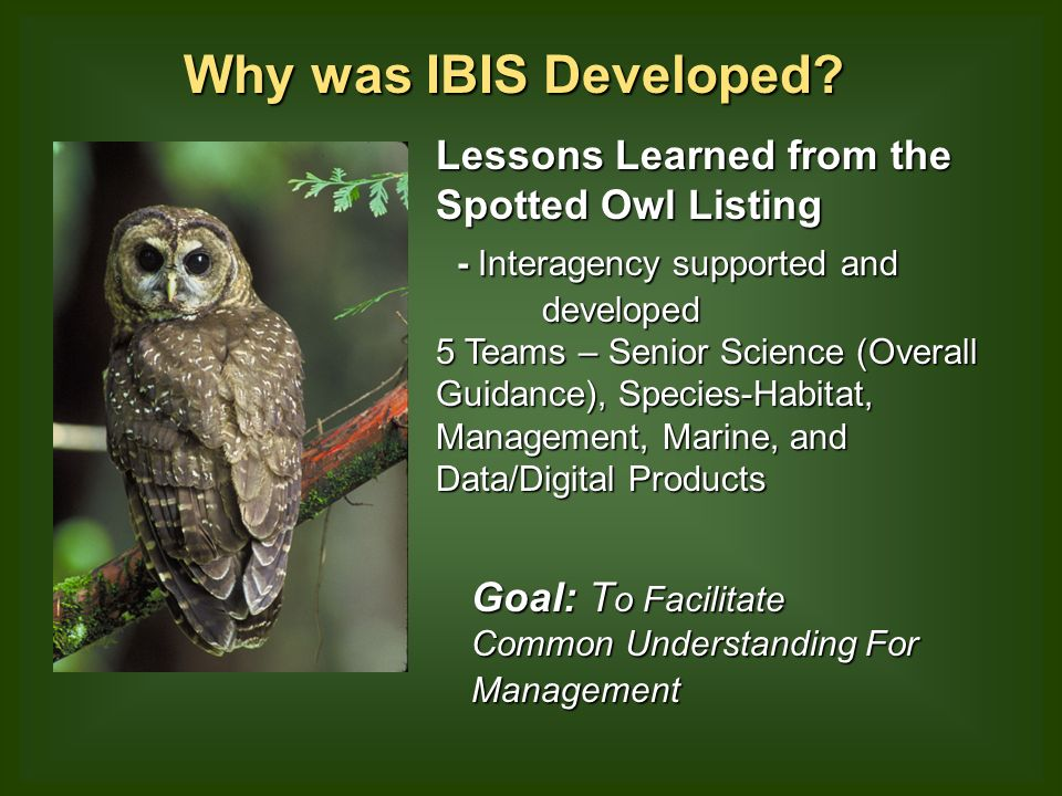 Why was IBIS Developed.