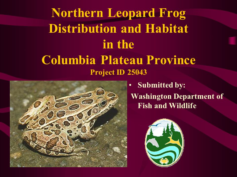 Northern Leopard Frog Distribution and Habitat in the Columbia Plateau Province Project ID 25043 Submitted by: Washington Department of Fish and Wildl